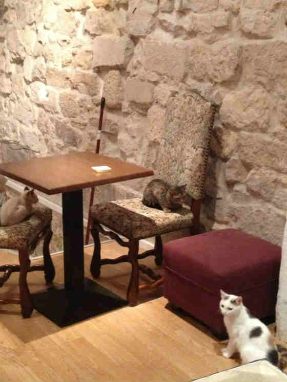 Cafe les Chats