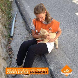 marketing veterinario condividere con le immagini